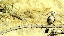 Bird on thorns