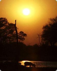 Sunrise on Waterbuck