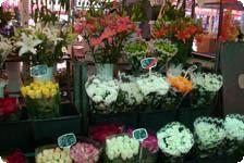 More flowers for sale
