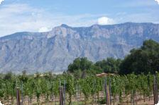 Corrales Vineyard
