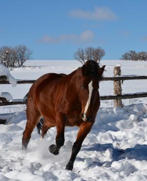 Mystic gallop winter