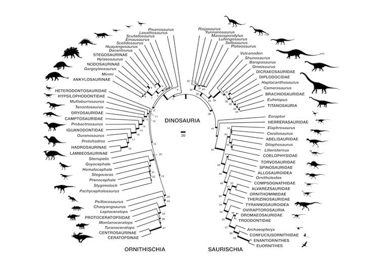CLASS NOTES: Dinosaur Life and Extinction (Dinosaur