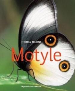 Motyle 250x300 - Motyle - Thomas Marent