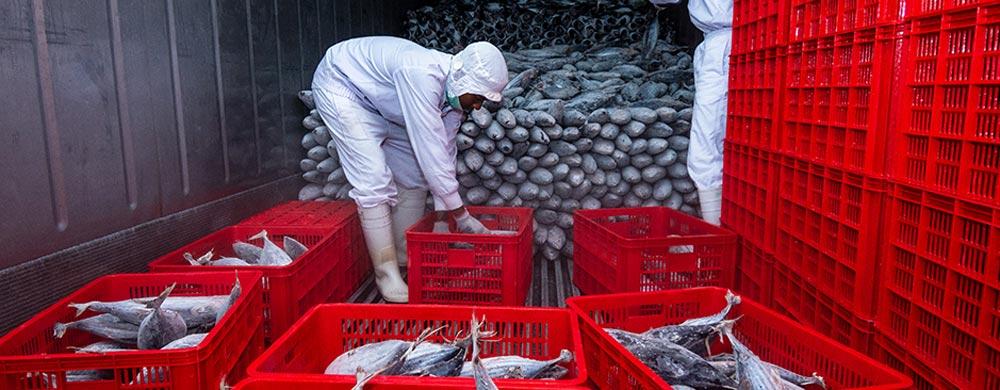 Một số thị trường tiềm năng cho ngành xuất nhập khẩu thuỷ sản Việt Nam