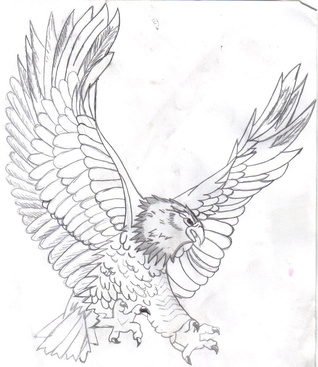 Cute Eagle Drawing