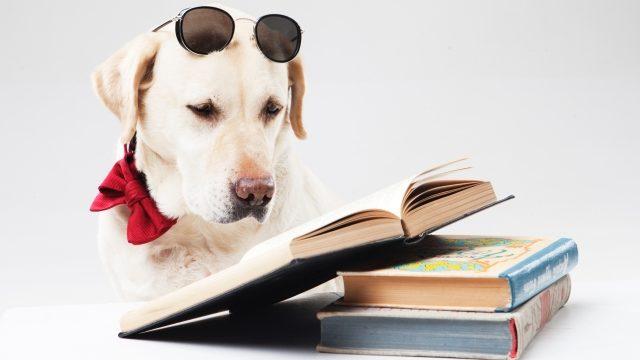 サングラスをかけて本を読む犬