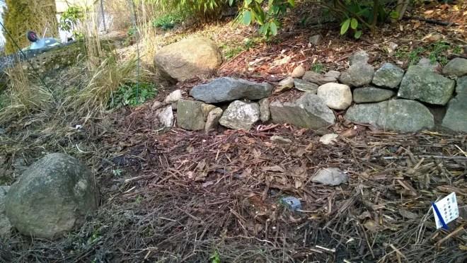 Slik ser staudebedet ut med et dekke av plantemateriale. De visne stenglene og bladene er klippet opp og strødd utover til et beskyttende dekke.