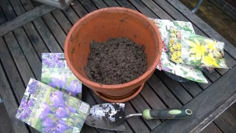 Plante løk i krukke