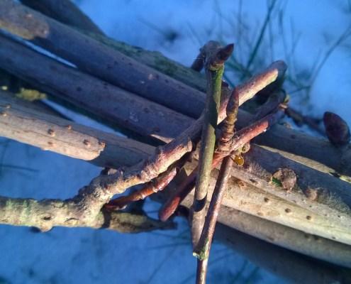 En bunt med kvister fra skogen