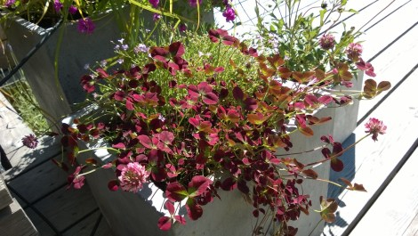 Betongkrukker med sommerblomster