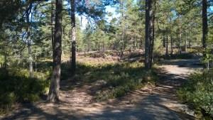Vakker høstdag i skogen