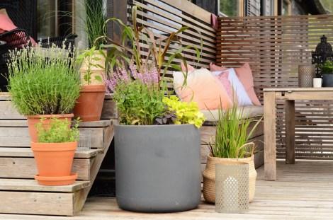 Urter og sommerblomster i krukker på terrassen