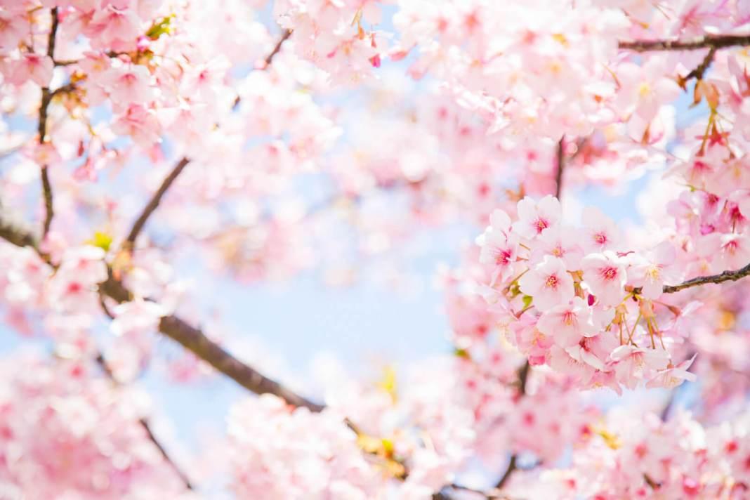 8 redenen waarom het goed is dat de lente is begonnen