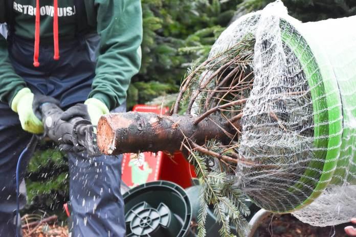 tips waardoor jij nog langer van je kerstboom kan genieten wees kritisch onderkant afzagen