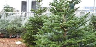 tips waardoor jij nog langer van je kerstboom kan genieten