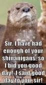 i've had enough of ur shenannigans...good day sir...