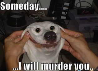 someday i will murder u