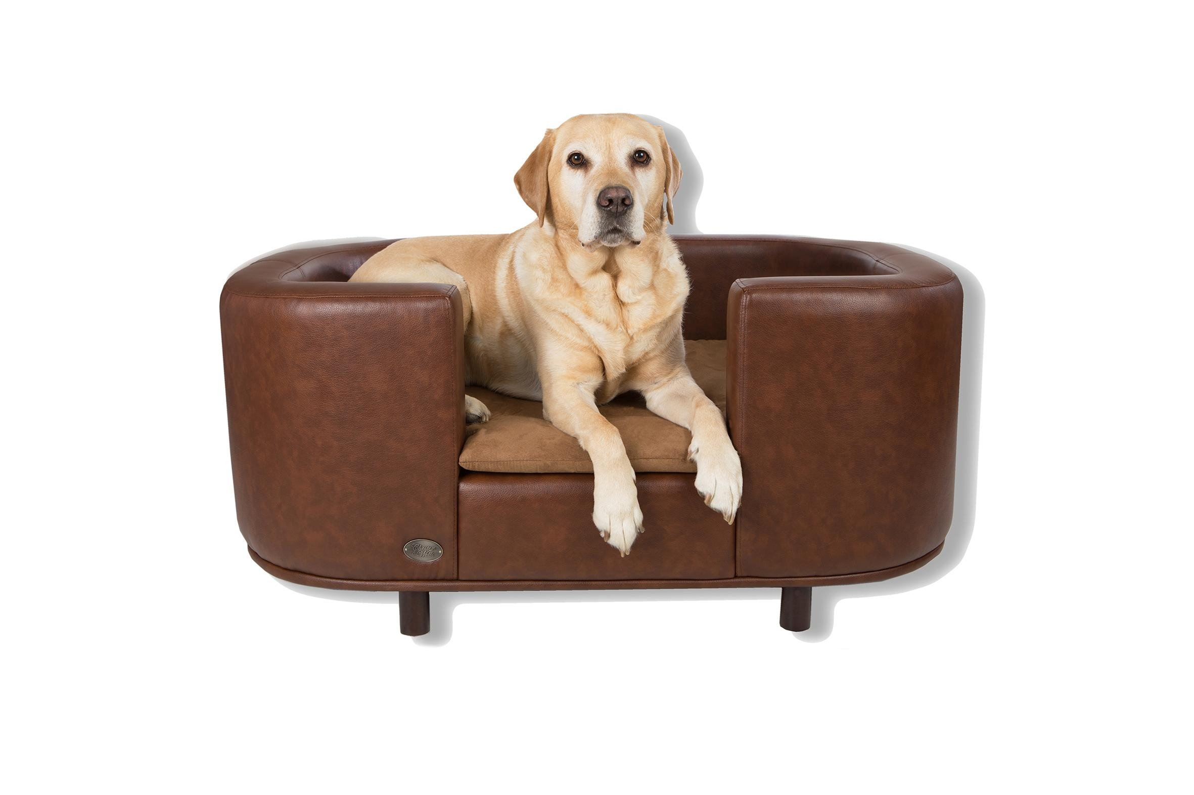 panache dog sofa roche bobois bed 20 43 choices of sofas and chairs ideas