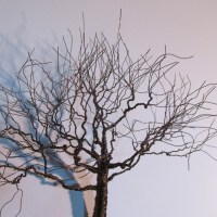 20 Inspirations Metal Wall Art Trees and Branches