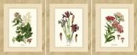 Wall Art Ideas: Framed Botanical Art Prints (Explore #3 of ...