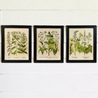 Wall Art Ideas: Framed Botanical Art Prints (Explore #6 of ...