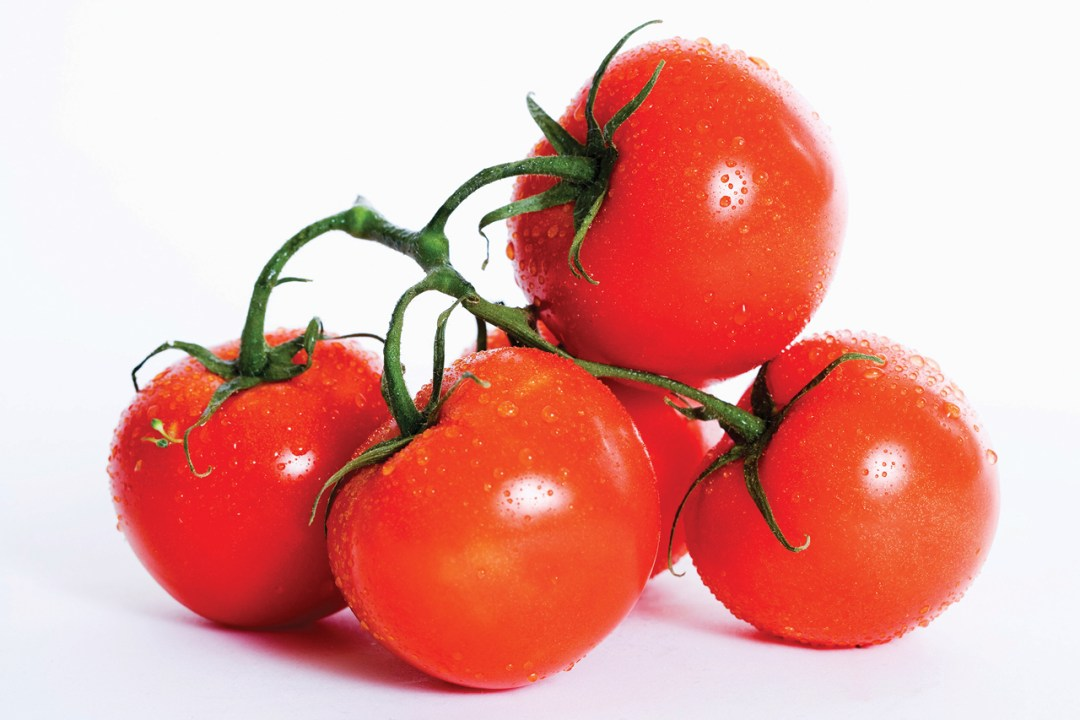 Food shot of tomatoes on white backdrop