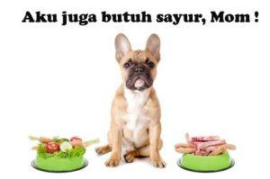 8 Sayuran yang snagat baik untuk Anjing