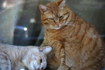 6 Penyakit pada Kucing Usia Tua
