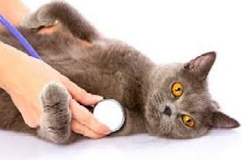 6 Penyakit pada Kucing Usia Tua yang Wajib Anda Ketahui