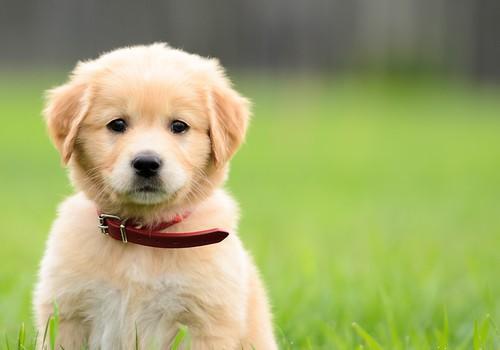 5 Manfaat Penting Kastrasi pada Anjing dan Kucing Jantan