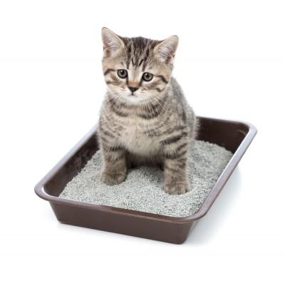 Cara mencegah kucing buang air sembarangan