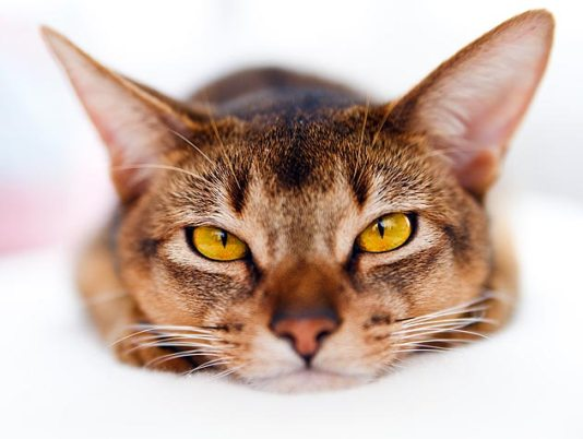Ketahui 8 gejala distemper kada kucing ini sebelum terlambat!