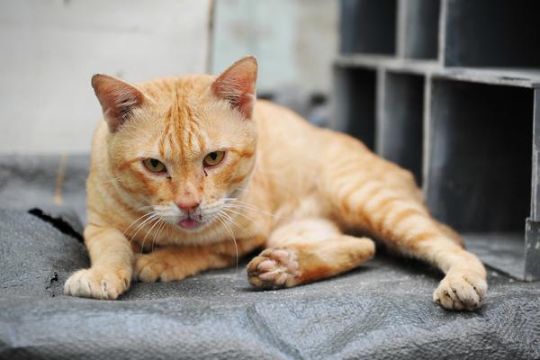 7 Faktor Penyebab Penyakit kulit pada Kucing dan Anjing