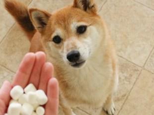9 Cara Mengobati Penyakit Kulit Pada Anjing atau Kucing.