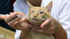 Antibiotik untuk kucing dan anjing