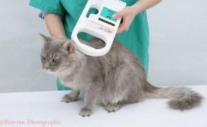 Mencari Kucing Hilang Kini Lebih Mudah dengan Microchip Pada Hewan