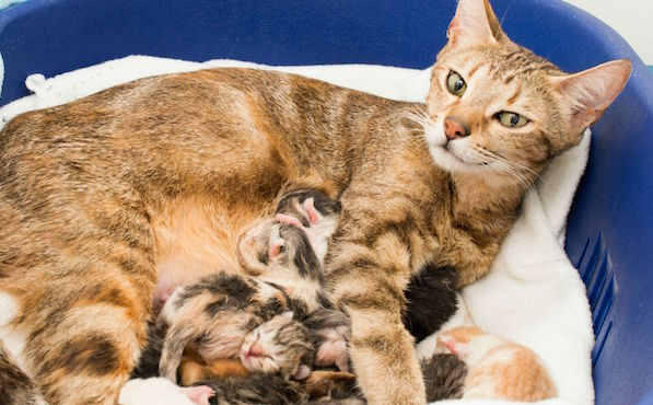 kucing dan anjing yang akan melahirkan