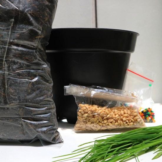 TDH Store - Paket Grow Kit Pet Grass