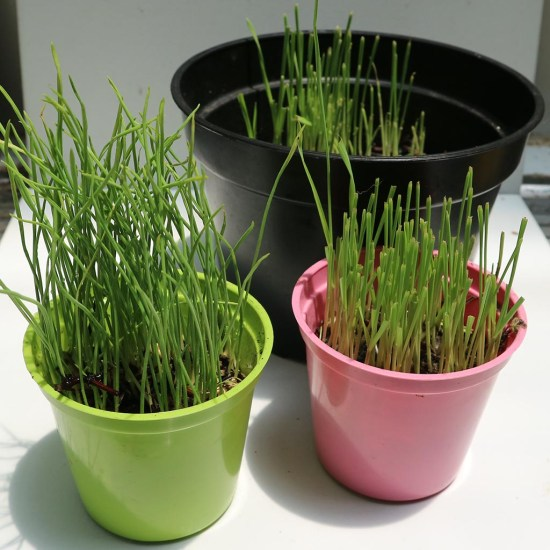 TDH Store - Paket Grow Kit Pet Grass