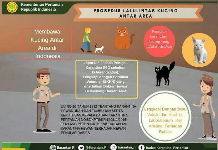 4 Langkah Membawa Anjing Dan Kucing Menggunakan Pesawat Tanya Dokter Hewan