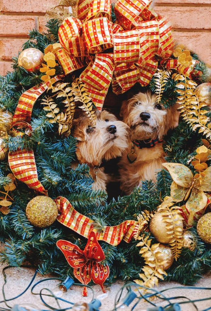 gift guide:furry friends