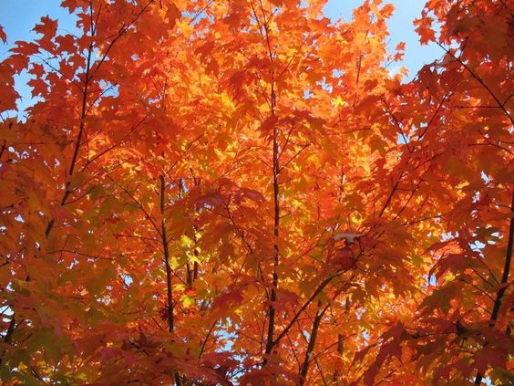 destination: Fall Foliage in New England