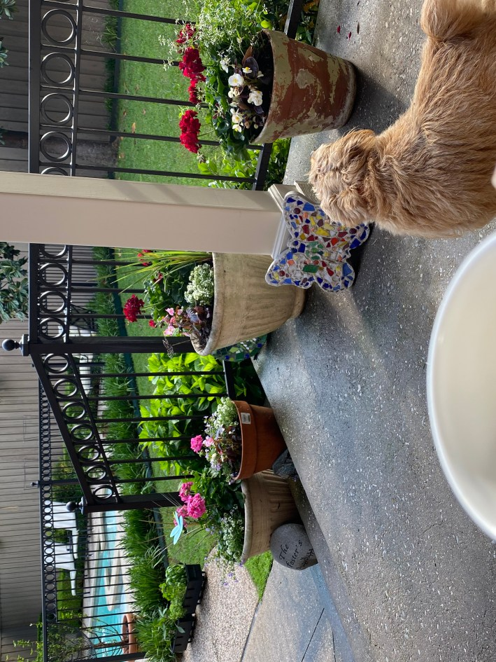 Tanya foster holding a coffee mug looking at her backyard with potted plants and a dog