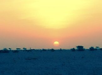 Regular Qatari migration back to the desert