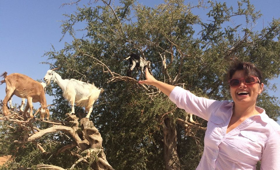 Morocco - the land where goats live on trees
