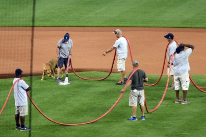 A dog gets thirsty running around Comerica Park as the grounds crew waters the infield June 17, 2015. (Tanya Moutzalias | MLive Detroit)