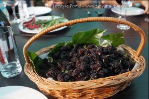 Freshly plucked mulberries for dessert