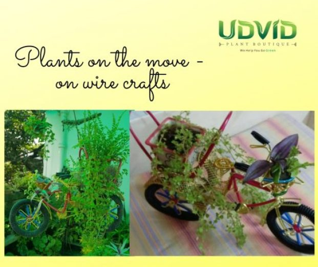 How about changing the way you gift - try these beautiful plants from Udvid Plant Boutique