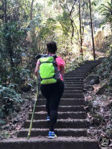 Return climb from root bridge