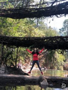 Wild and free at the Root Bridge